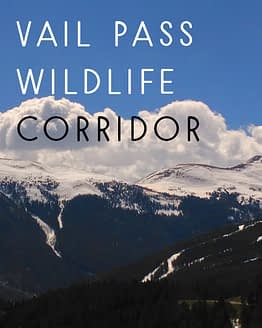 Name the Vail Pass Wildlife Corridor