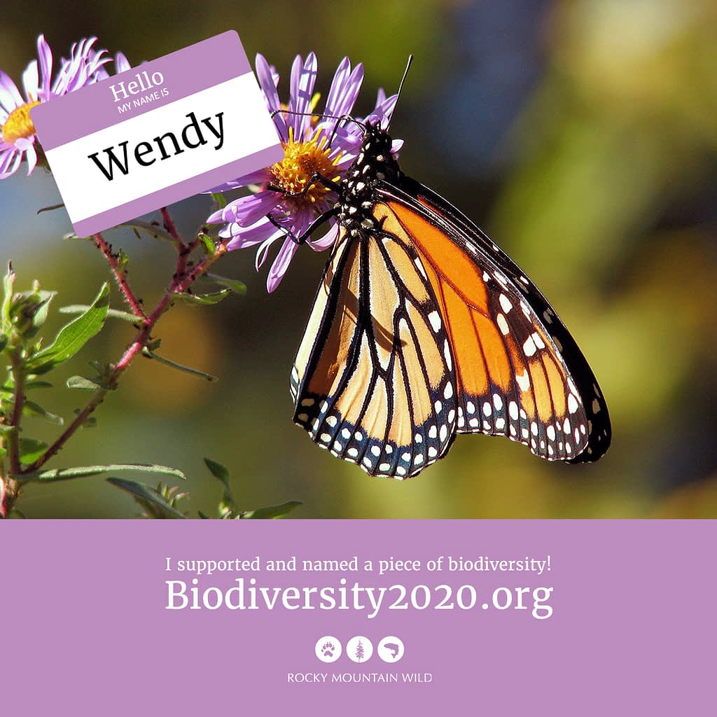 A monarch butterfly named Wendy