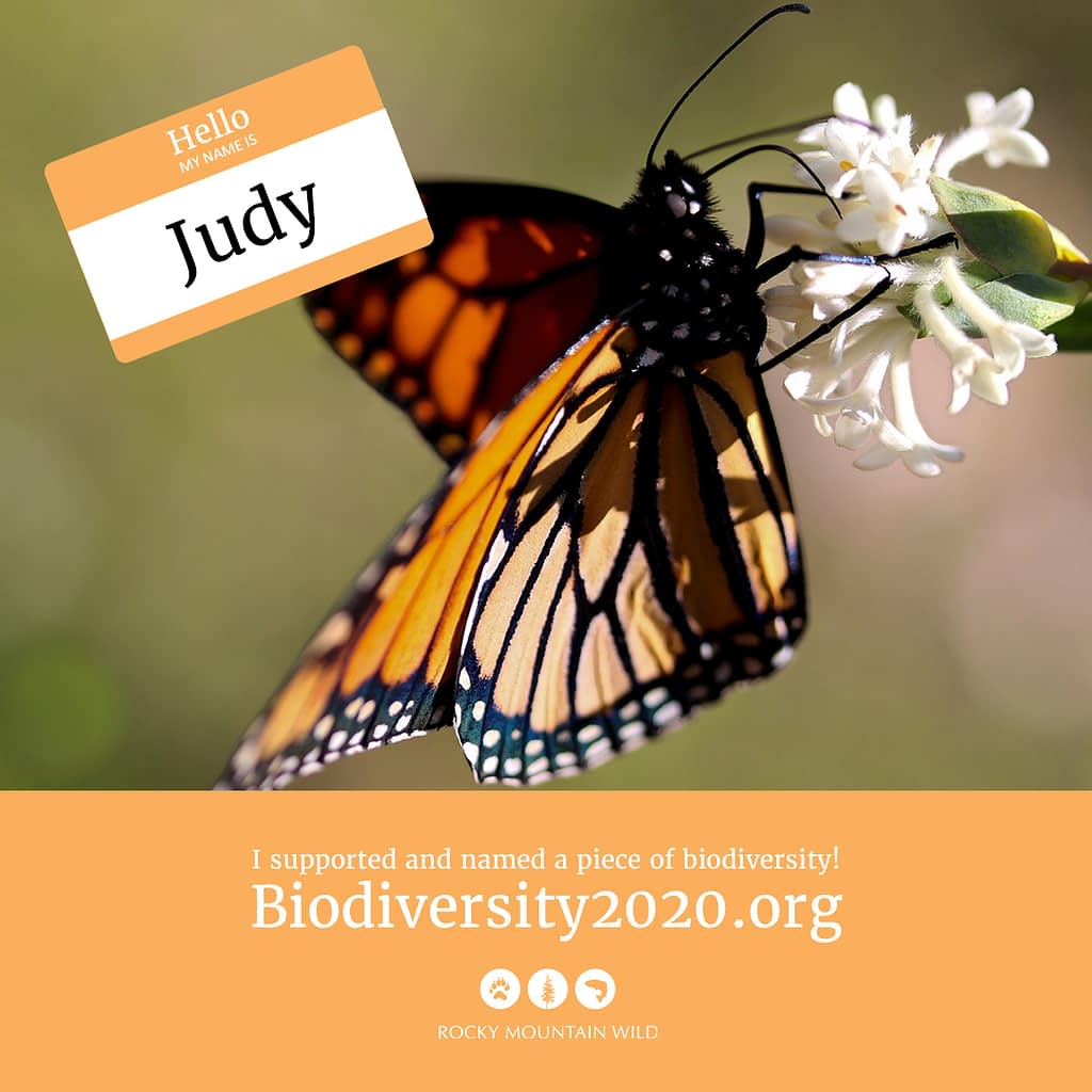 A monarch named Judy
