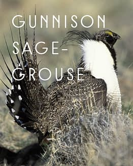 Naming Rights to Gunnison Sage-Grouse