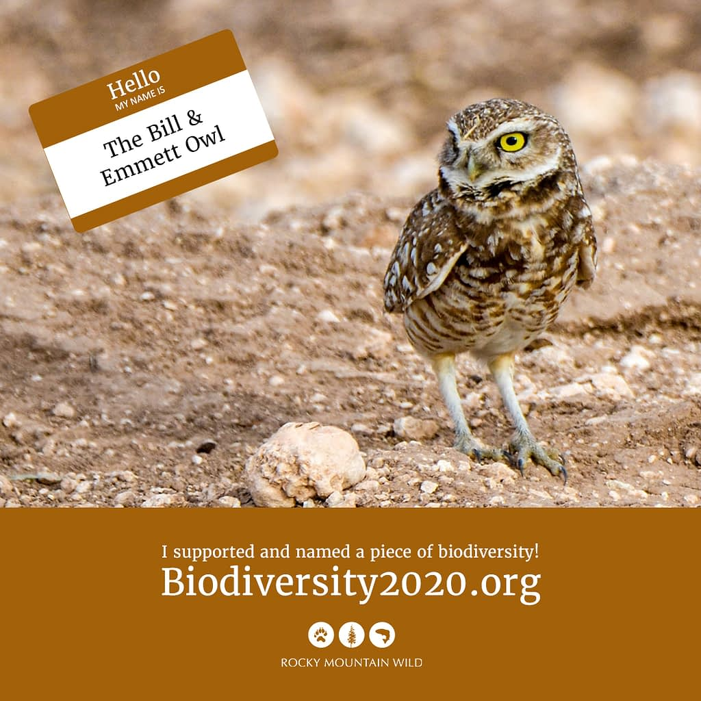 Burrowing owl named The Bill & Emmett Owl